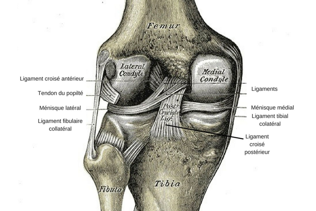 Douleurs au genou